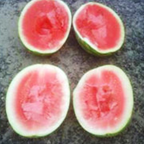 Arkansas---Watermelon